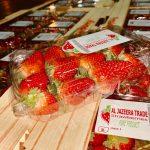 al jazeera trade fresh strawberry