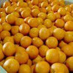 egyptian fresh oranges