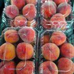 egyptian peaches